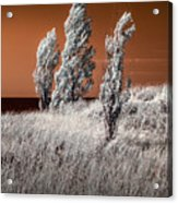 Three Trees  In Infrared On Top Of A Grassy Dune Acrylic Print