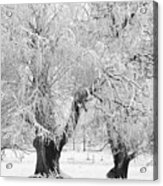 Three Trees In The Snow - Bw Fine Art Photography Print Acrylic Print