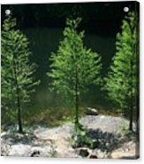 Three Trees Of Ohio Acrylic Print