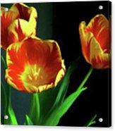 Three Tulips Photo Art Acrylic Print