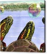 Three Turtles Three Bubbles Acrylic Print