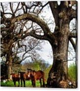 Three Under A Tree Acrylic Print