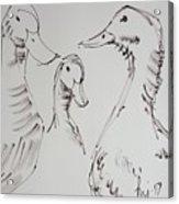 Three White Ducks Drawing Acrylic Print