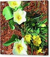 Three White Tulips Painting Acrylic Print