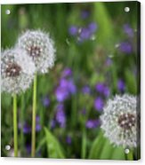 Three Wishes Acrylic Print