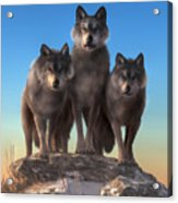 Three Wolves Watching You Acrylic Print