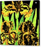Three Yellow-black Irises, Painting Acrylic Print