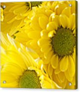 Three Yellow Daisies  Acrylic Print by Garry Gay
