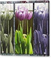 Threelips Acrylic Print