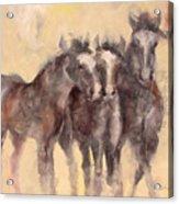 Through A Horses Ears Acrylic Print