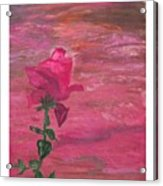 Through Rose Colored Glasses Acrylic Print
