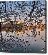 Through The Cherry Tree Acrylic Print