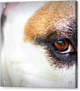Through The Eyes... Acrylic Print