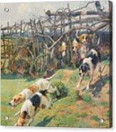 Through The Fence Acrylic Print by Arthur Charles Dodd