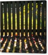 Through The Fence Acrylic Print