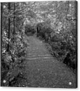 Through The Forest Canopy Black And White Acrylic Print