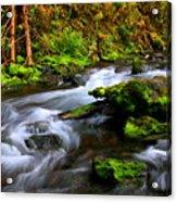 Through The Forest Floor It Flows Acrylic Print