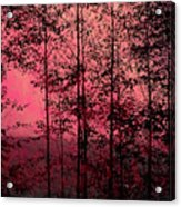 Through The Forest, Rose Acrylic Print