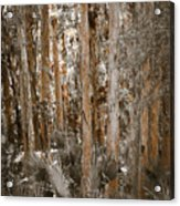 Through The Forest Trees Acrylic Print