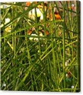 Through The Grass Curtain Acrylic Print
