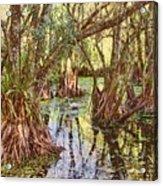 Through The Mangroves Acrylic Print