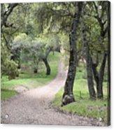Through The Oaks Acrylic Print