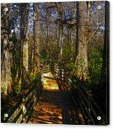 Through The Swamp Acrylic Print