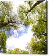 Through The Tree Tops Acrylic Print