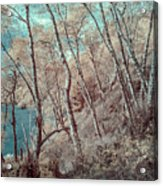 Through The Trees In Infrared Acrylic Print