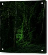 Through The Woods Dark And Deep Acrylic Print