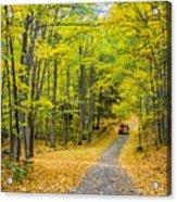 Through Yellow Woods 2 Acrylic Print