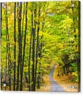Through Yellow Woods Acrylic Print