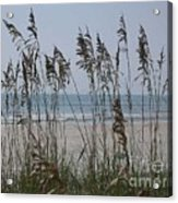 Thru The Sea Oats Acrylic Print