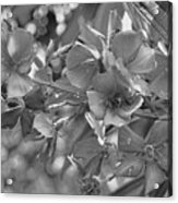 Tibouchina In Black And White Acrylic Print