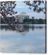 Tidal Basin Blossoms - Jefferson Memorial Acrylic Print