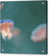 Tie-dyed Jellyfish Acrylic Print