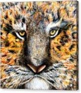 Tig The Tiger With An Attitude Acrylic Print