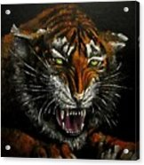 Tiger-1 Original Oil Painting Acrylic Print