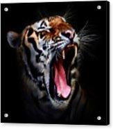 Tiger 10 Acrylic Print