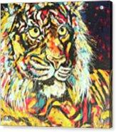 Tiger #2 Acrylic Print