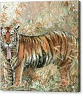 Tiger - 28 Acrylic Print