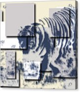 Tiger 5 Acrylic Print