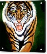 Tiger Charging Acrylic Print