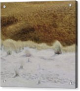 Tiger Dune Acrylic Print