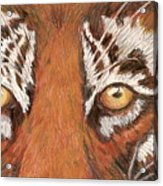 Tiger Eyes 2 Acrylic Print
