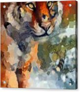 Tiger Hotty Totty Style Acrylic Print