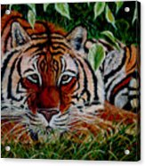 Tiger In Jungle Acrylic Print