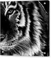 Amur Acrylic Print