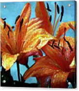 Tiger Lilies After The Rain - Painted Acrylic Print