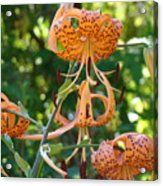 Tiger Lilies Art Prints Canvas Summer Tiger Lily Flowers Acrylic Print